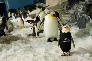 Animales de SeaWorld Parks & Entertainment son noticia