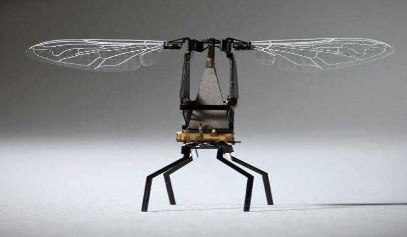 abeja-robot-1