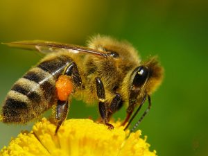 Científicos crean abeja robótica que poliniza como una real