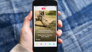 Tinder despliega campaña para la reproducción del último rinoceronte blanco