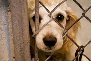 Castigan con cárcel el maltrato animal en Costa Rica
