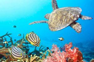 Hoy, 08 de junio, celebramos el Día Mundial de los Océanos