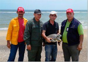 Liberada tortuga verde en aguas del Golfo de Venezuela