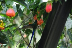 Aricagua apoya recuperar su camino real para el Turismo