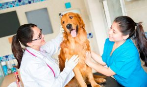 21 de julio: Día Nacional del Médico Veterinario