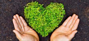 01 de septiembre: Día Mundial de Oración por el Medio Ambiente.