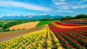 09 de septiembre: Día Mundial de la Agricultura