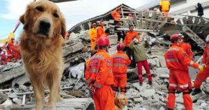 Cinco pasos para proteger a tu mascota en caso de sismo