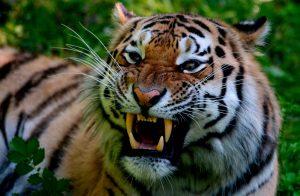 04 de octubre: Día Mundial de los Animales