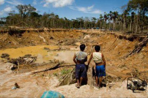 «En cinco años un 53% de la superficie forestal ha sido arrasada por la minería ilegal»