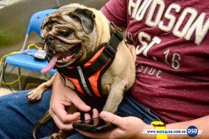 Mundo Adocanino regaló momentos peludos en Sambil Maracaibo