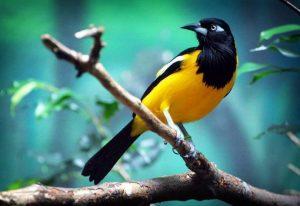 Venezuela posee el séptimo lugar a nivel mundial en aves