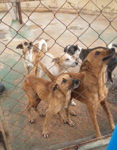 Kapui Tours y Vanes Maracaibo se unen para apoyar a Asodepa y la fundación «Deja tu huella» a llevar comidas a los animales necesitados