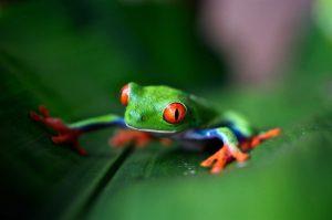 Día Internacional de la Diversidad Biológica: preservarla es invertir en salud