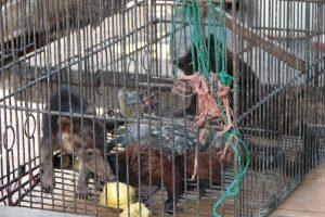 Proponen la prohibición total del comercio de animales silvestres, para evitar futuras pandemias