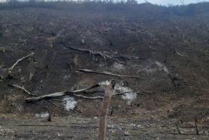 Parque Nacional Terepaima sufrió un terrible daño ecológico