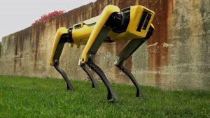 Perros robots pastorean ovejas en Nueva Zelanda