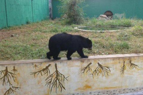 Oso frontino se escapó del Parque Bararida en Barquisimeto