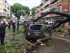 Vientos fuertes causan estragos en árboles de Caracas