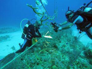Cuba emprende rescate de arrecifes dañados por la contaminación y el cambio climático