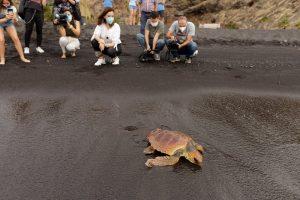 Tortugas Marinas, uno de los animales más amenazados del planeta