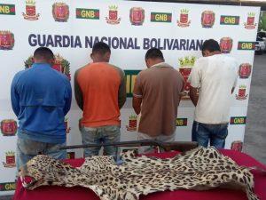 Acusados de dar muerte a manatí y jaguar serán imputados por el Ministerio Público