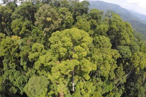 Afectados millones de árboles en los trópicos, por los «rayos»