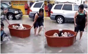 Pareja de mexicanos, les salva la vida a unos perros utilizando una tina