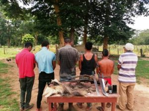 Detenidos seis sujetos por matar un oso hormiguero en el Zulia