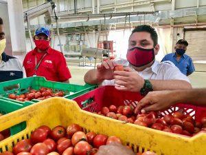 Realizaron con éxito pruebas para producir pasta y salsa de tomate en el Zulia