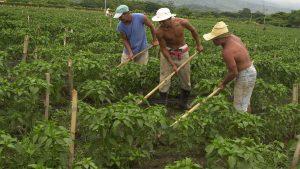 Productores del estado Lara se movilizan en mulas para abastecerse de insumos debido a escasez de gasolina