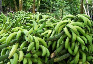 Codhez: El salario mínimo no alcanza ni para comprar 10 plátanos en Maracaibo