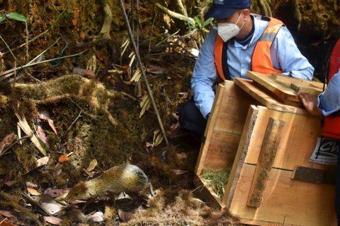Más de 2.400 animales son liberados en el día de la biodiversidad en Colombia