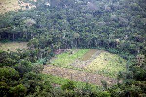 Colombia recupera 248 hectáreas de parque natural amenazado por deforestación