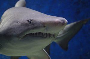 Tiburón blanco gigante asustó a un grupo de hombres en Australia
