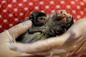 Rescates de animales en el Amazonas generan esperanza en medio de incendios