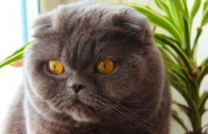 Venden gato en más de 100 mil dólares, por cumplir deseos