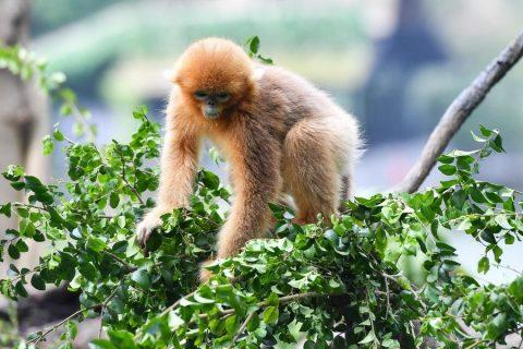 Avistan raros monos y leopardo salvaje en noroeste de China