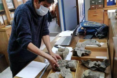 Chile descubre el «Arackar licanantay», un dinosaurio del desierto de Atacama