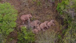 Elefantes errantes permanecen en localidad de suroeste de China
