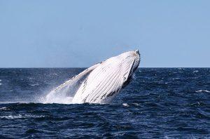 Mueren tres de las 12 ballenas varadas en costas chinas